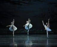 Three Little Swan Dance-The Swan Lakeside-ballet Swan Lake Royalty Free Stock Photos