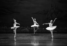 Three Little Swan Dance-The Swan Lakeside-ballet Swan Lake Stock Photo