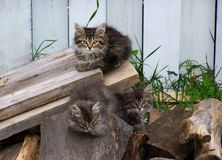 Three little taby cats relaxing outside Royalty Free Stock Photo