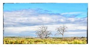 Three lives. 3 dead trees bettys baai South Africa Royalty Free Stock Photos