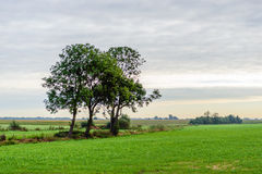 Three lone trees in a flat rural landscape Stock Image