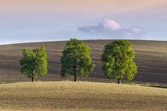 Three lonely trees on wavy ground royalty free stock image