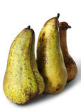 Three long pears Royalty Free Stock Photos
