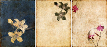 Three lovely background textures Stock Images