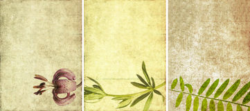 Three lovely background textures Royalty Free Stock Photos