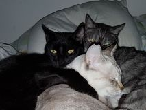 Three loving cats resting stock photography