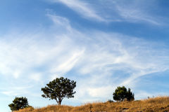 Three low green trees on a background of blue sky with clouds. Autumn landscape. Three low green trees and dry yellow grass on a background of blue sky with Royalty Free Stock Photo
