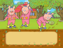 Three lpigs. Three little pigs discover the loss of cabbage from the garden Stock Image