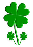 Three Lucky Four-leaf Clovers Stock Photo