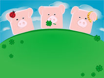 Three lucky pigs Stock Images