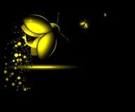 Three luminous night-flying beetle Royalty Free Stock Images