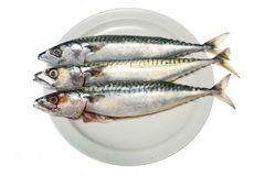 Three mackerel Stock Photo