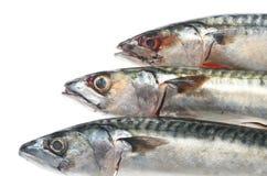 Three mackerel Stock Image