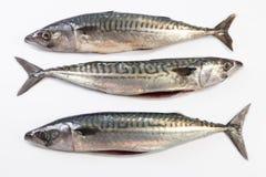 Three Mackerel fish Stock Photo