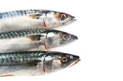 Three mackerel heads Stock Photography