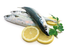 Three mackerel with lemon and parsley Royalty Free Stock Photos
