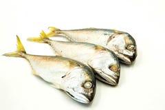 Three Mackerel Stock Photography
