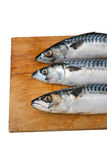 Three mackerel on a wooden Board isolated. On white background Royalty Free Stock Photos