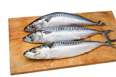 Three mackerel on a wooden Board isolated. On white background Royalty Free Stock Images