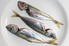 Three mackerels Stock Photos