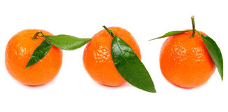 Three mandarin with green leaves Stock Images