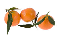Three mandarines Stock Images