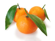 Three mandarins Royalty Free Stock Photos