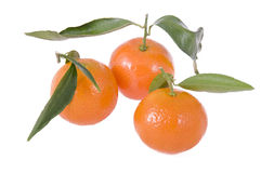 Three mandarins with leaves Stock Images