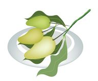 Three Mango Fruits on A White Plate Stock Images