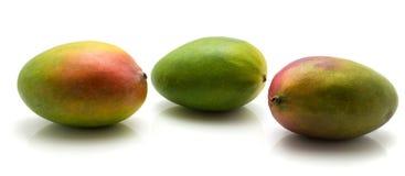 Fresh mango isolated. Three mango isolated on white background Stock Photography
