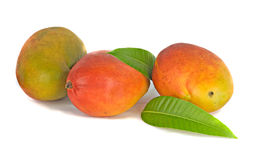 Three mangoes Royalty Free Stock Photos