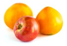 Three many-coloured tomatoes Royalty Free Stock Image