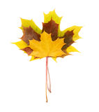 Three maple leaves Royalty Free Stock Image