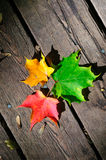 Three maple leaves on the wooden plank Stock Photos
