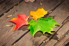 Three maple leaves on the wooden plank Royalty Free Stock Photos