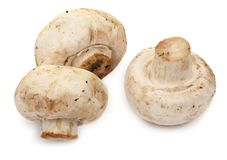 Three meadow mushroms Royalty Free Stock Image