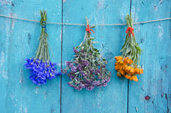 Three medical herb flowers bunch on wooden wall Royalty Free Stock Image