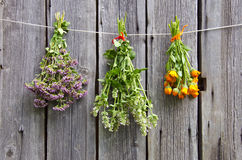Three medical herbs bunch on old wooden wall. Three medical herbs bunch on old wooden farm wall stock images
