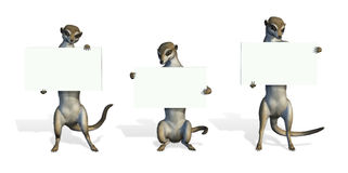 Three Meerkats Holding Blank Signs Royalty Free Stock Photos
