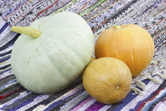 Three mellow  pumpkin Royalty Free Stock Photos