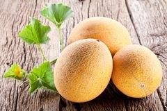 Three melon with the leaves Royalty Free Stock Photo