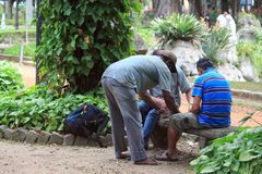 Three men play cards in park of Sao Paolo Stock Photos