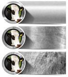 Three Metal Banners with Head of Cow Stock Photos