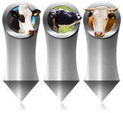 Three Metal Banners with Head of Cow Royalty Free Stock Photo