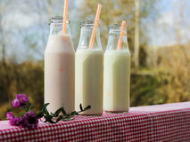 Three milk bottles on a table Royalty Free Stock Images