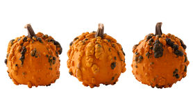 Three mini pumpkin Stock Photography