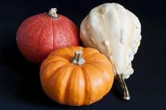 Three mini pumpkins. On black background Royalty Free Stock Photos