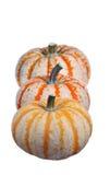 Three mini pumpkins royalty free stock image