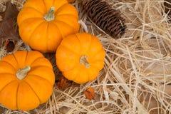 Three Mini Pumpkins Stock Image