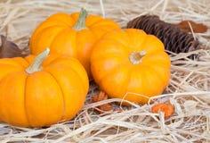 Three Mini Pumpkins Stock Photos